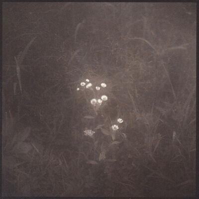 Denise Oehl, 'Tiny Flowers', 2018
