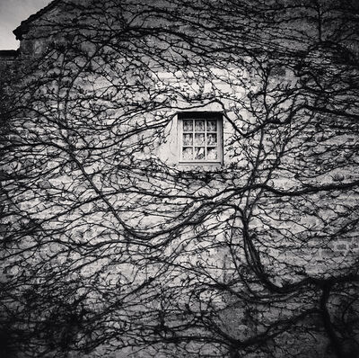 Michael Kenna, 'Window and Vines, L'Abbaye de Fontenay, Bourgogne', 2013