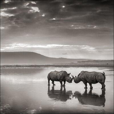 Nick Brandt, 'Rhinos in Lake, Nakuru', 2007