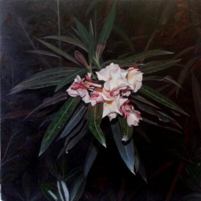 Marcos Cárdenas, 'Nerium Oleander'