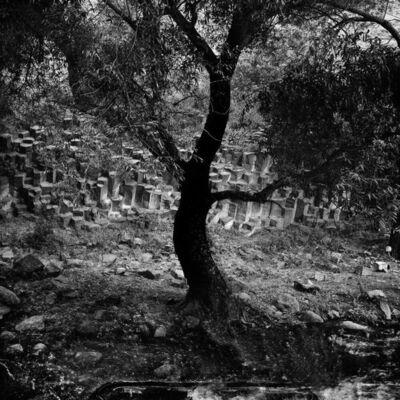 Osheen Harruthoonyan, 'Tree of Garni ', 2011