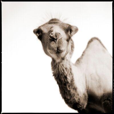 Nine Francois, 'Camel', 2015