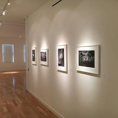 """Tomohiro Muda: Mizu-no-bo """"Aspects of Water"""", installation view"""