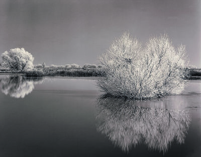 Roman Loranc, 'Frosted Willows', 1998