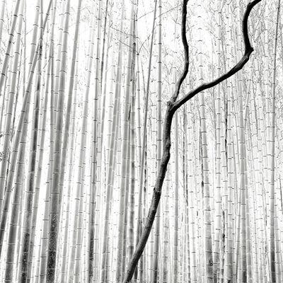Stefano Orazzini, 'Arashiyama Bamboo Forest', 2010