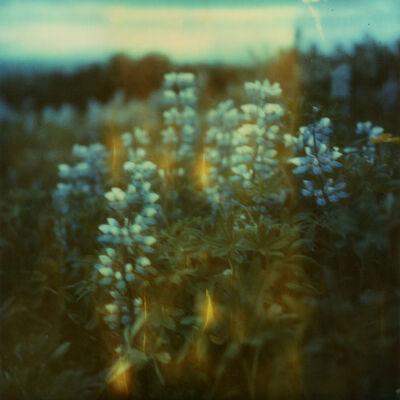 Julia Beyer, 'Lupinus', 2018