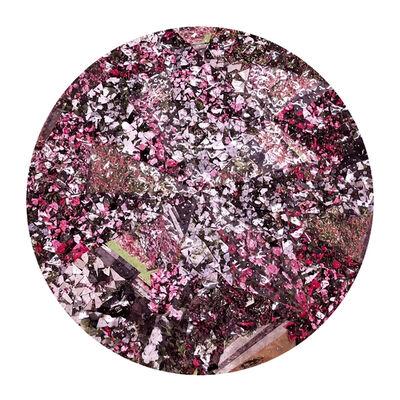 Mabel Poblet, 'Rose Garden', 2018