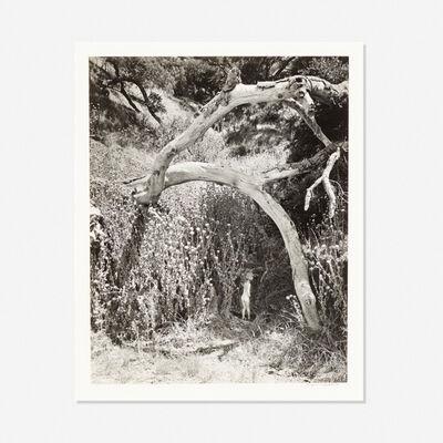 Wynn Bullock, 'Untitled', 1959