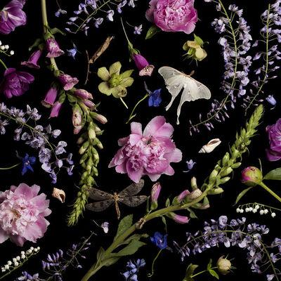 Paulette Tavormina, 'Botanical V, Peonies and Wisteria', 2013
