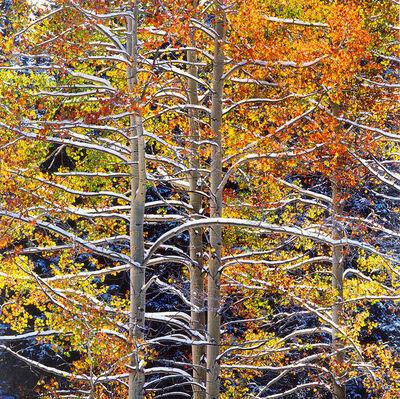 Christopher Burkett, 'Luminous Aspens with Snowy Branches, Colorado', 2000