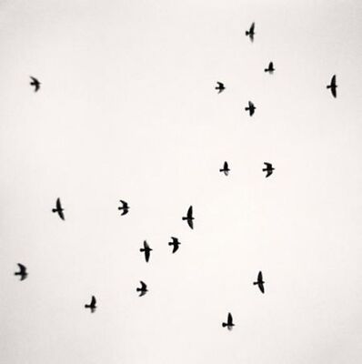 Michael Kenna, 'Eighteen Birds, Reggio Emilia, Italy', 2007
