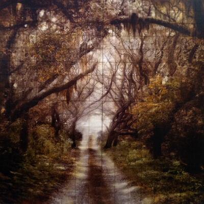 John Folsom, 'Cumberland Island Parallel Trail', 2011