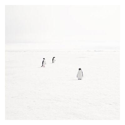 David Burdeny, 'Three adeli penguins on fast ice'
