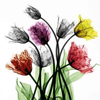 Arie van 't Riet, 'Franse Tulpen'