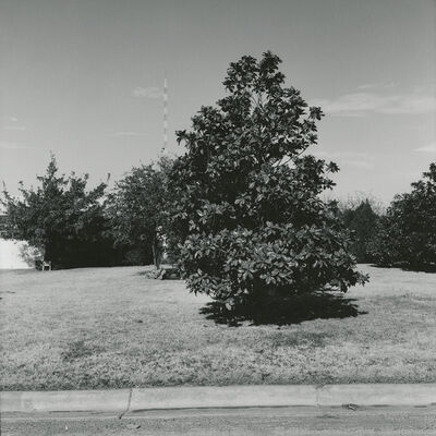 Frank Gohlke, 'Magnolia Tree, Kessler Blvd. looking north - Wichita Falls, Texas', 1972/1973