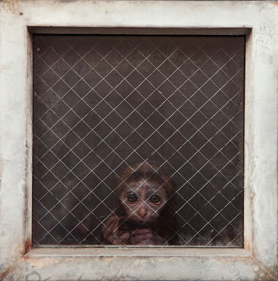 Dan Witz, 'Monkey ( Actual Victim)', 2015