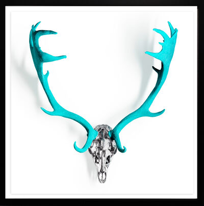 Angela Morris-Winmill, 'Tiffany Diamond Dust Fallow Deer skull ', 2019