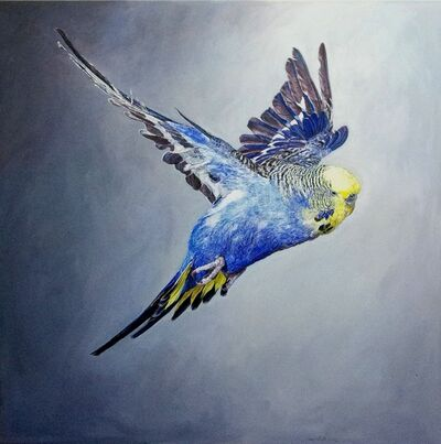 Ulrich Lamsfuss, 'Frank Greenaway, Blue Budgerigar with yellow head in flight, side view (gty im. 73507000), No 1', 2012