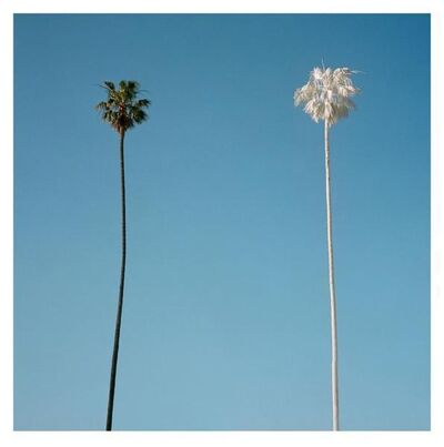 George Byrne, 'White Palm', 2015