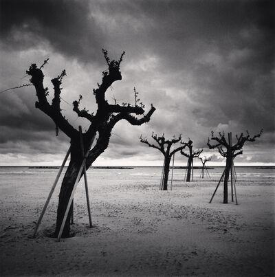 Michael Kenna, 'Five Trees, Pescara, Abruzzo, Italy', 2016