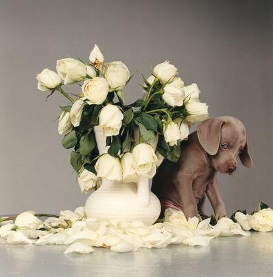 William Wegman, 'Riddles and Roses', 1999