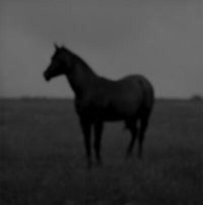 Jock McDonald, 'Horse', 2010
