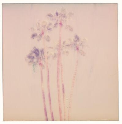 Stefanie Schneider, 'Palm Springs Palm Trees VII (Californication)', 2016