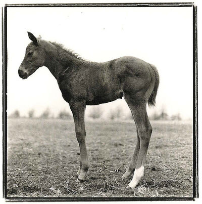 Keith Carter, 'Foal Study 1', Unknown