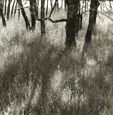 Ruth Bernhard, 'Trees Walking', 1972