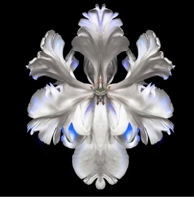 Jeff Robb, 'White Bloom', ca. 2020