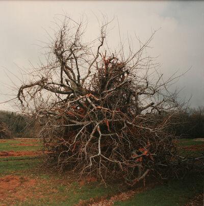 Thaddeus Holownia, 'Orchard #1', 2010