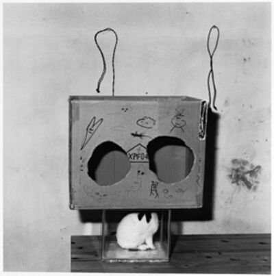Roger Ballen, 'Boxed Rabbit', 2002