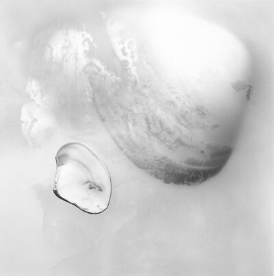 Rebecca Palmer, 'A Great Shell, from the series Meditations', 2012