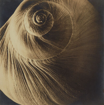 Edward Steichen, 'The Spiral Shell', 1921