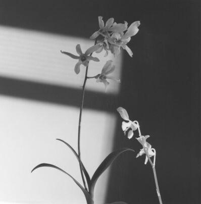 Robert Mapplethorpe, 'Flower', 1986