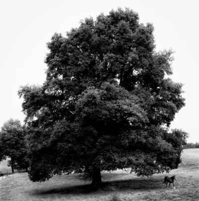 Nicolas Auvray, 'The Great Oak and The Horse', 2010