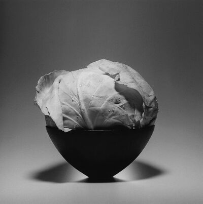Robert Mapplethorpe, 'Cabbage', 1985