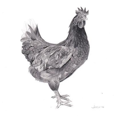 Jessie Babin, 'Chicken', 2016