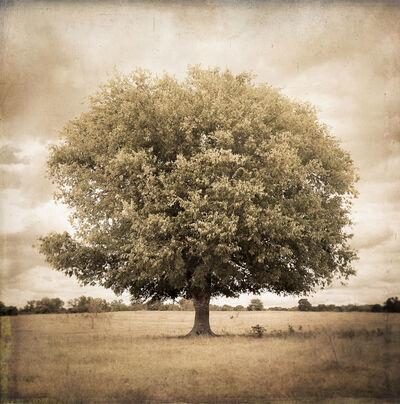 Kate Breakey, 'Hackberry Tree, Plum Creek, Texas'