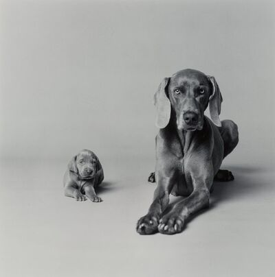 William Wegman, 'Untitled (Mother and Puppy)', 1989-printed later
