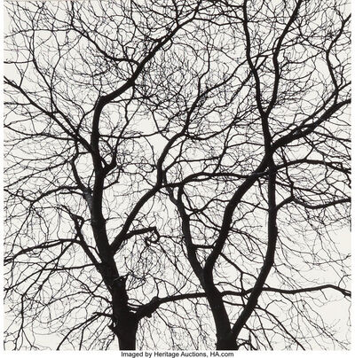 George Tice, 'Trees Portfolio (complete with twelve photographs)', 1964-65