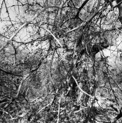 Lee Friedlander, 'Aravaipa Creek Preserve, Arizona', 1999