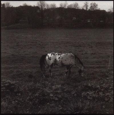 Denise Oehl, 'Horse', 2018
