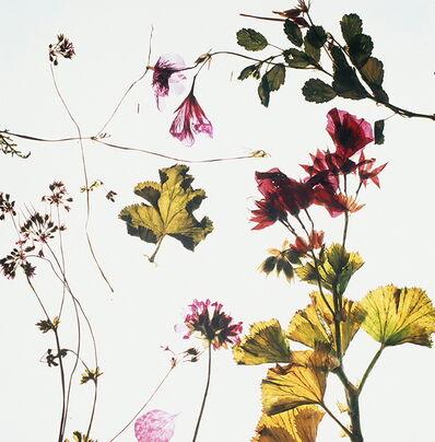 Lien Botha, 'Green with Ivy II', 2018