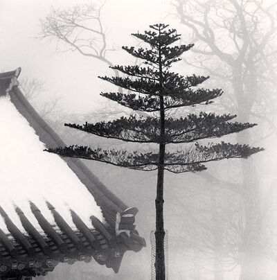 Michael Kenna, 'Temple Tree, Jonjaamji, Jeju Island, South Korea', 2012