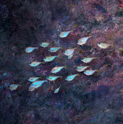 Hiroshi Watanabe, 'TDTDC 73 (School of Fish)', 2012