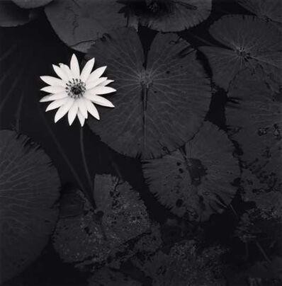 Michael Kenna, 'Mamtas Lotus Flower, Ban Viengkeo, Luang, Prabang, Laos.', 2015