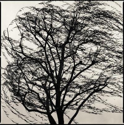 Hiroshi Watanabe, 'Willow Tree, Imperial Palace, Tokyo, Japan', 2005