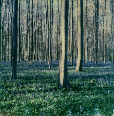 Kirsten Thys van den Audenaerde, 'Bluebell Dream - Contemporary, Landscape, trees, Polaroid, 21st Century, Blue', 2017