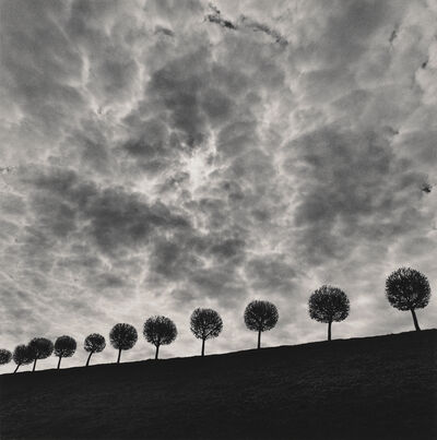 Michael Kenna, 'Ten and a Half Trees', 2000